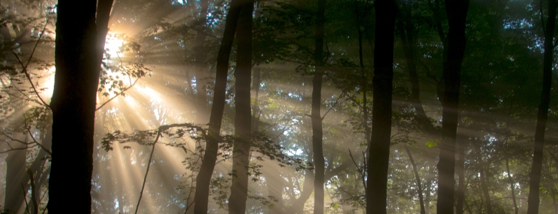 light streaming through forest