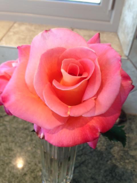 Granada rose 2015